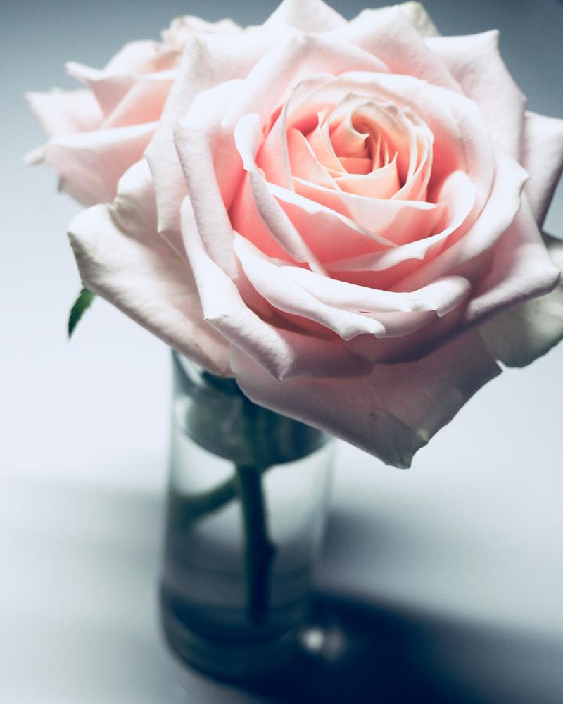 La Vie en Rose Lyrics & English Translation - Edith Piaf
