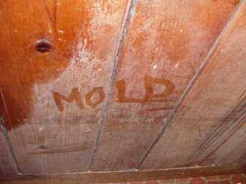 toxic mold is bad m'kay