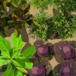 Salad garden design idea