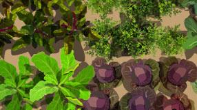 Garden planting design ideas