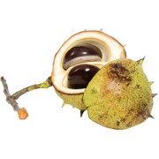Display seasonal autumn conkers in your home