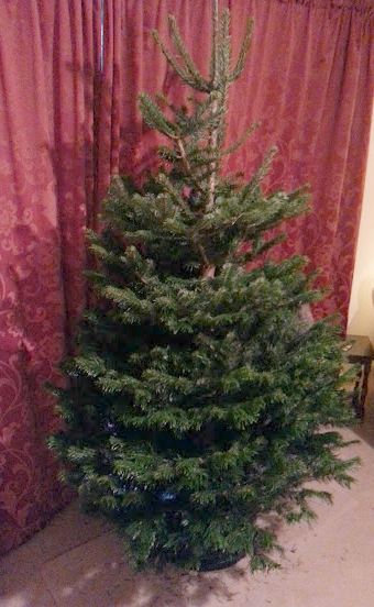 Fresh Design Blog real Nordmann fir christmas tree from Pines and Needles
