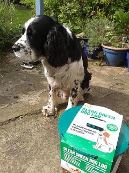 Fresh Design dog Monty Spaniel checks out the Clean Green Dog Loo
