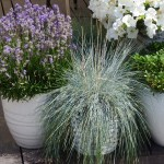 How to…..plant a scented container garden
