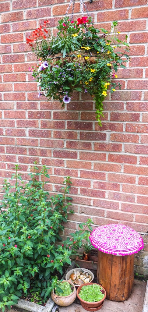Stunning hanging basket handmade by Roger Savage from Choice Plants