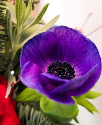Stunning purple anemone flower in a seasonal bouquet