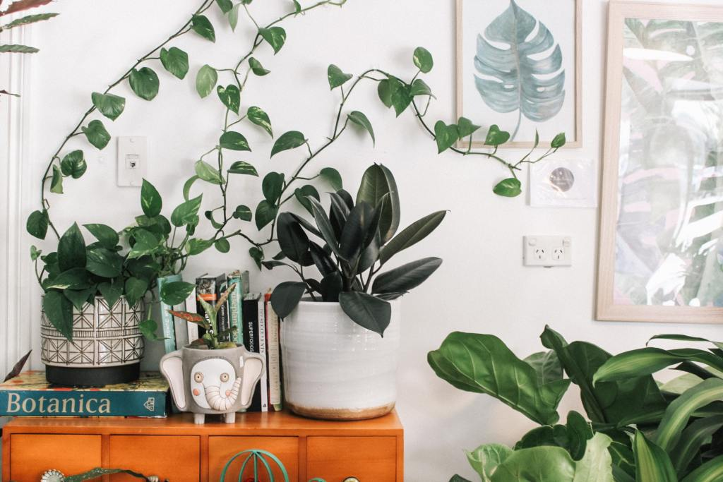 Plants can be used as a way of personalising your rental apartment
