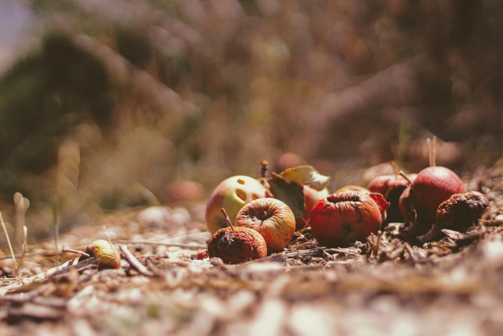 Apples and other fruit and vegetable peelings are ideal to make your own compost