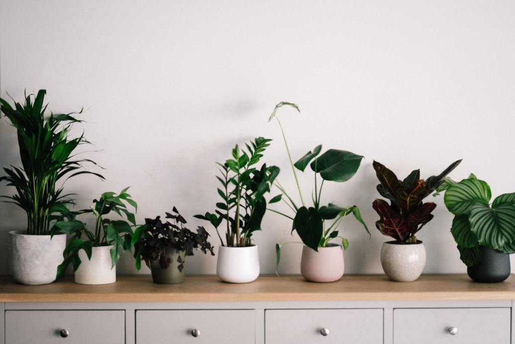 House plants look great displayed on a shelf
