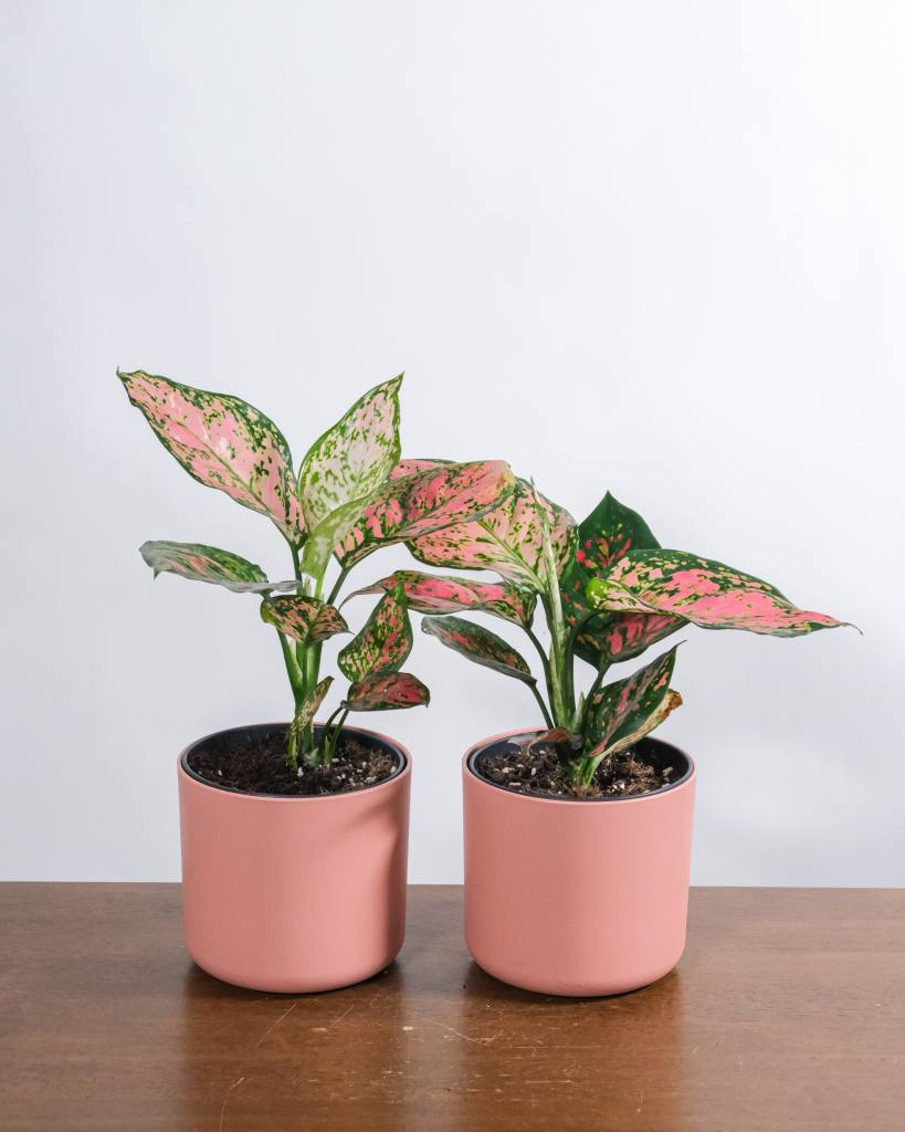 Research the care needs of your house plants to ensure you're caring for them correctly