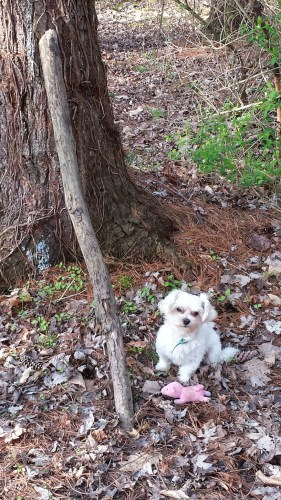 Nacho dog in the woods with his toy
