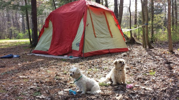 dogs camping in the woods with a tent
