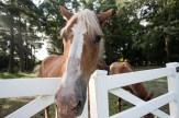 horseroad-6