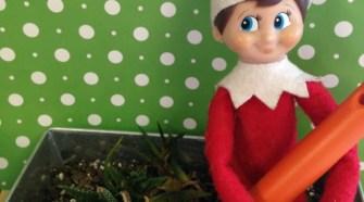 Elf on the Shelf Idea- Let's Garden