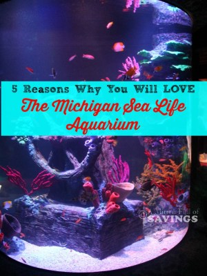 5-Reasons-Why-You-Will-LOVE-The-Michigan-Sea-Life-Aquarium-683x1024
