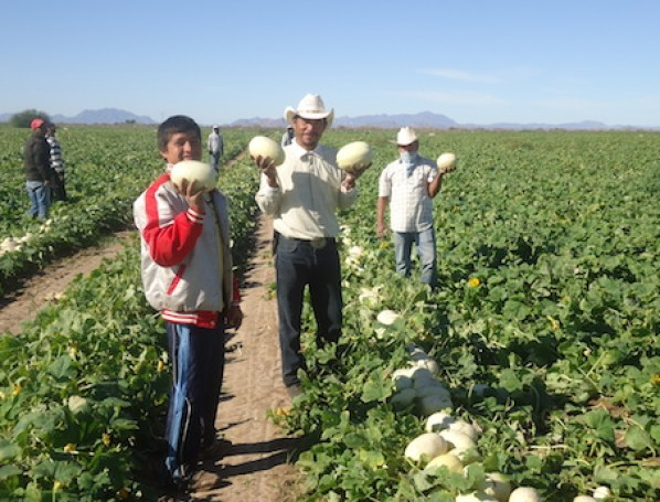Mexico offers extensive organic produce options to North American consumers