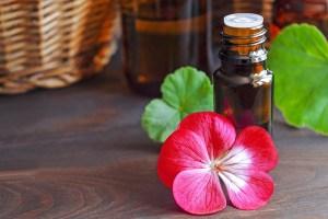 essential-geramium-oil