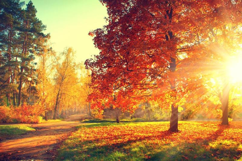 Trees and leaves autumn sunlight