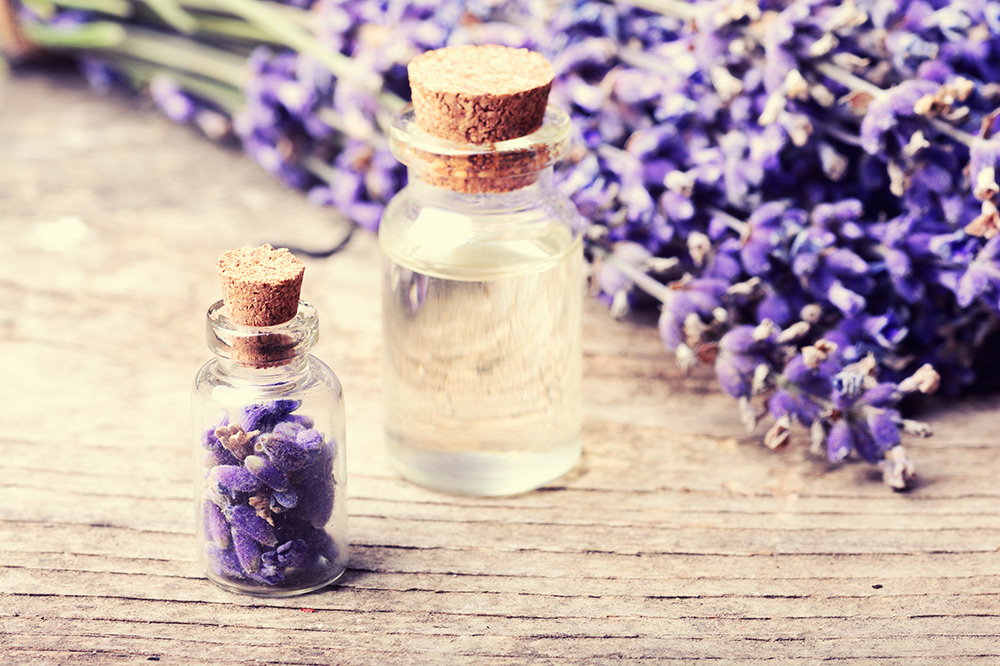 Fresh lavender flowers and lavender essential oil in a bottle for use in aromatherapy
