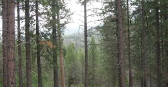 Cascadel Heights Dr,  North Fork, CA  93643