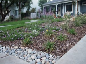 Larger flowerbeds with drought-tolerant plantings.