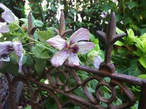 The FresYes Garden: February