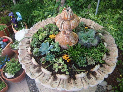 With current watering restrictions, Kim turned her fountain into a succulent planter.