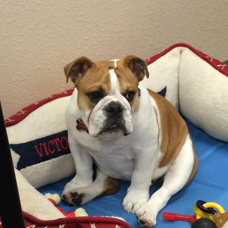 Victor E Bulldog III