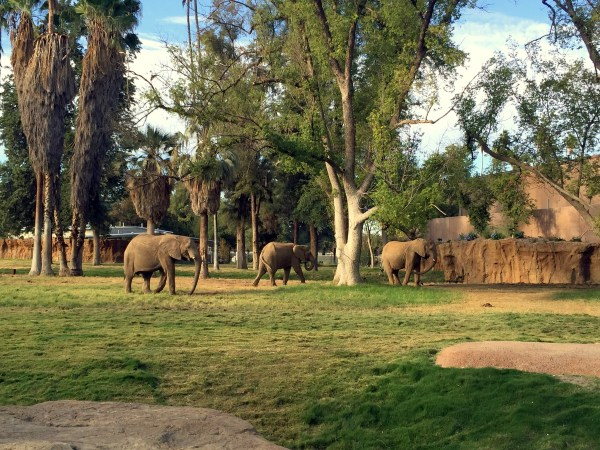 Oh hey you three awesome African elephants, just milling peacefully about! Looking good.