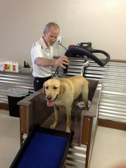 Owner Chris Topjian helps dry a dog at Top Dog Pet Wash.