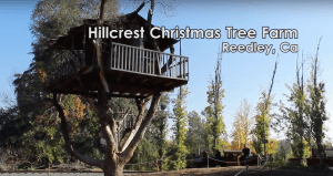 Take a Ride With the Family: Hillcrest Christmas Tree Farm