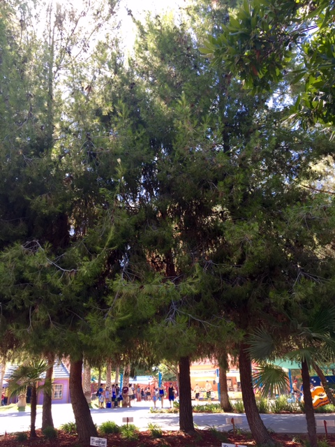 Awesome shade trees have grown in fully, providing a pleasant park experience at Island Waterpark