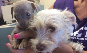 Adopt Local: Animal Compassion Team
