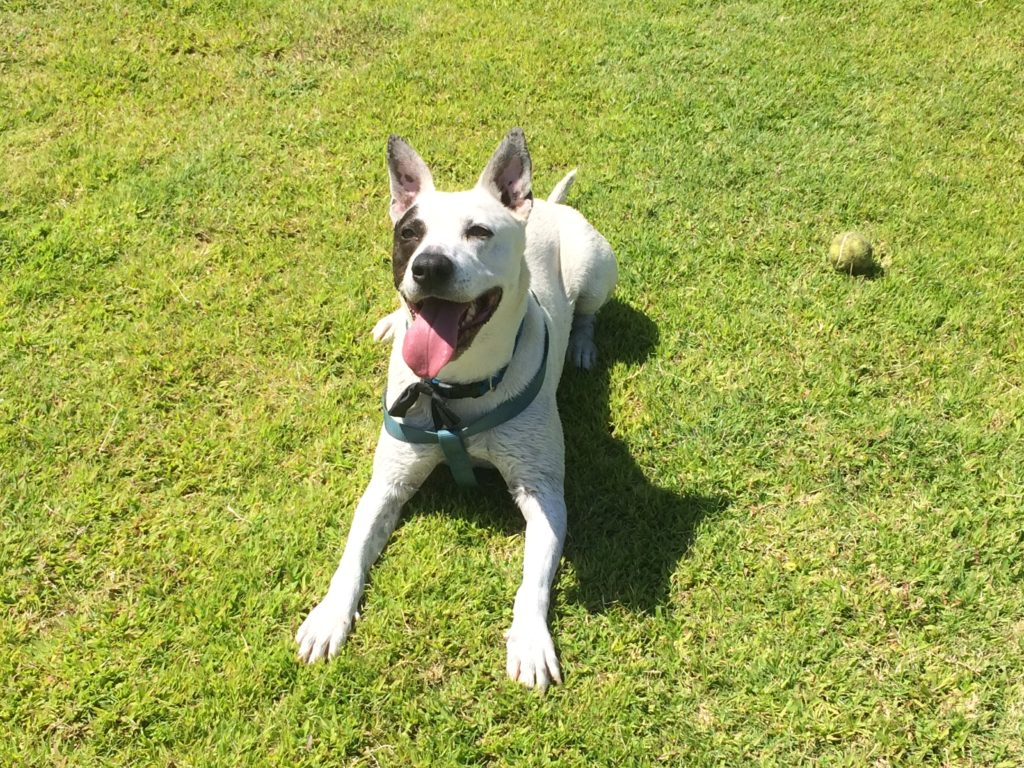 Dexter, Longtime Shelter Dog Needs Permanent Foster Home