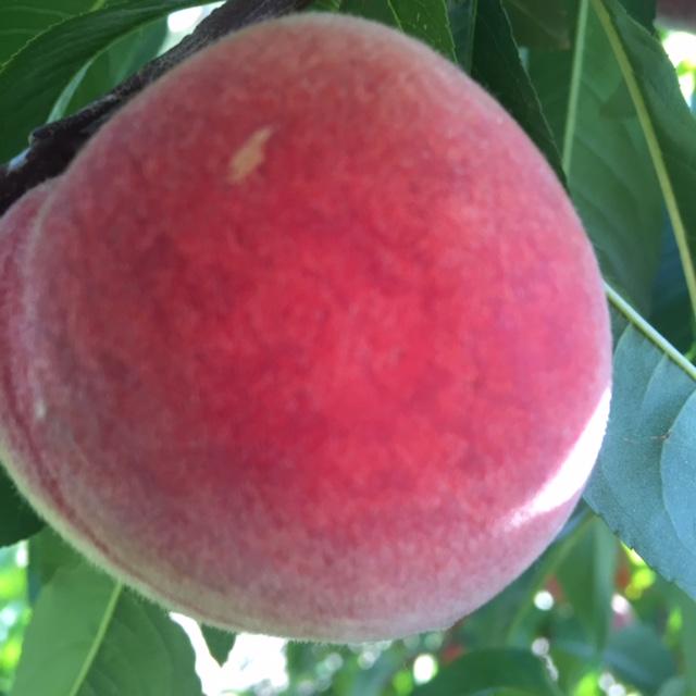 an elberta peach