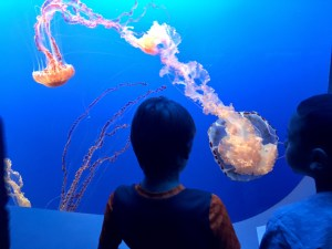 Take a FresYes Daytrip to the Monterey Bay Aquarium