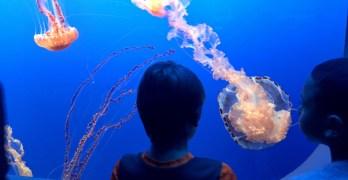 Take a FresYes Daytrip to the Monterey Bay Aquarium