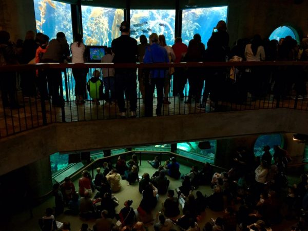 Daytrip to the Monterey Bay Aquarium