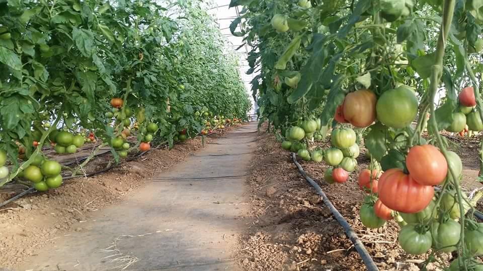 Harvest Fields Organic Farms CSA