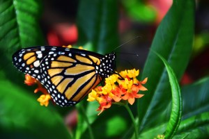 The Mariposa Butterfly Festival is Three Days of Fun for Everyone