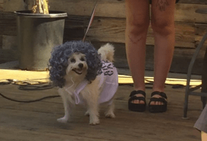 Margaret Atwoof, Bark Twain, Win at First Annual LitPup