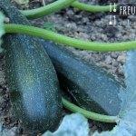 Melanzani Zucchini Auflauf – vegetarisch