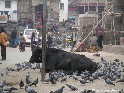 Kathmandu-Durbar-Kuh-c