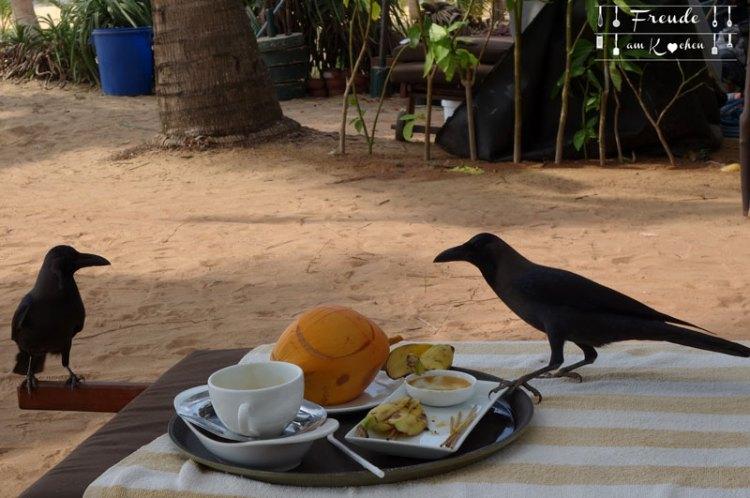King Coconut - Sri Lanka - Freude am Kochen