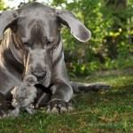 hund-tier-fotografie-stein