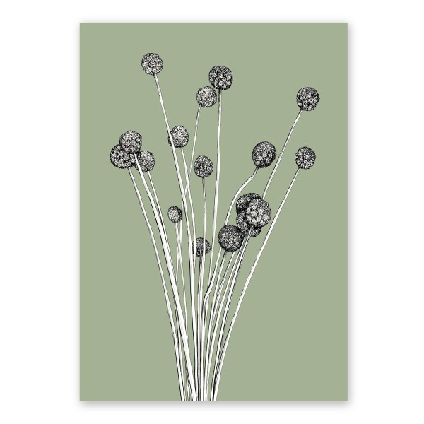 The Billy Buttons