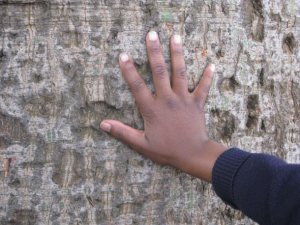 image of young person's hand on tree trunk