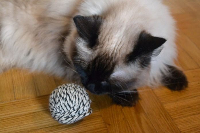 ragdoll and ball of yarn