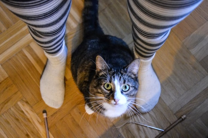 striped cat stripey tights