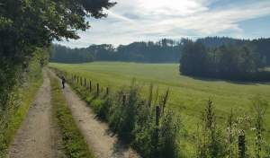 A bit of a walk